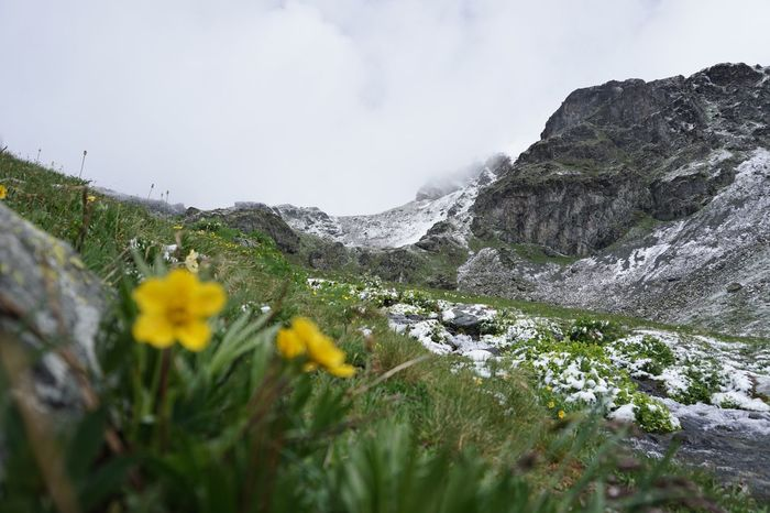 Summer snow Escaping Switzerland SwissAlps! Epic View Peaks Inspired By Nature Inspired By Beauty Adventure The Great Outdoors Mountains Alps Flowers Summer Snow Scenery Tranquility Landscape
