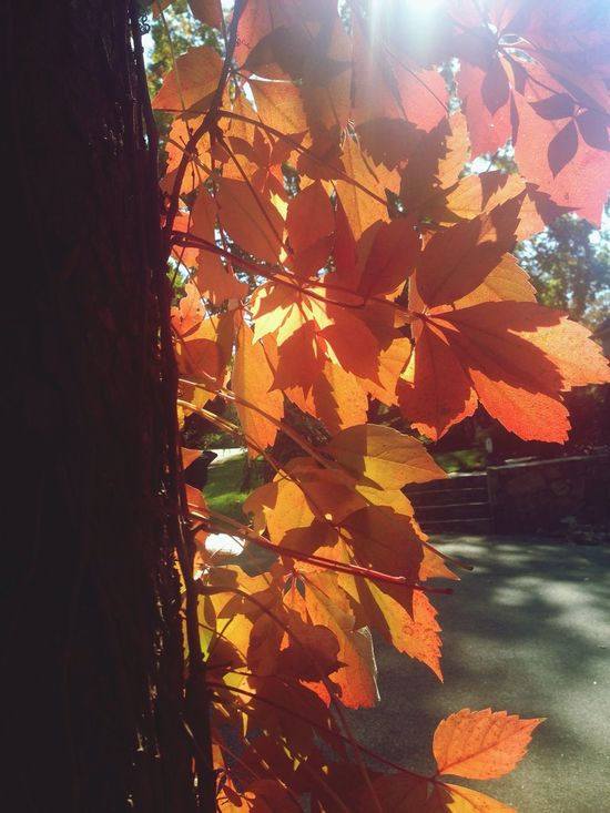 Golden glow. Eye4photography  EyeEm Nature Lover October Love Fall Colors