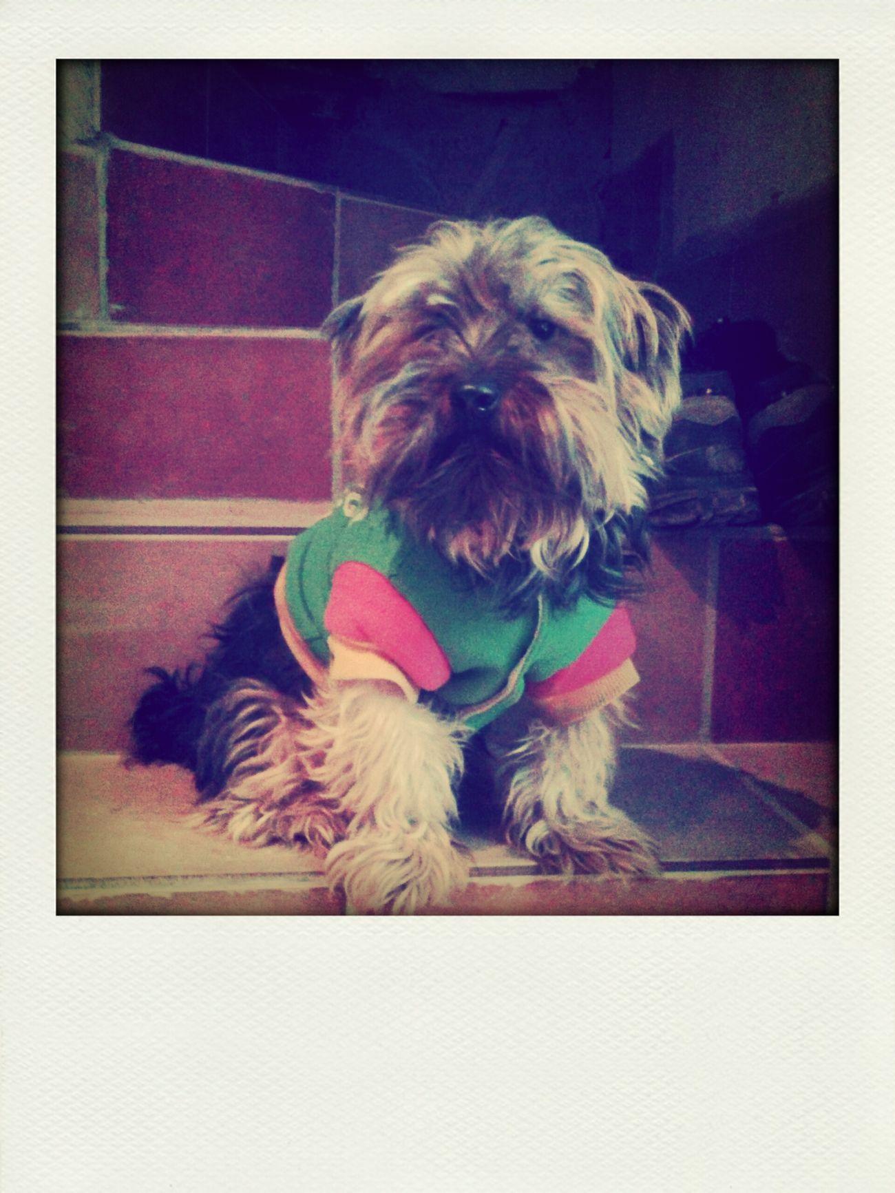 Mi peerrito Runi <3 My Pets :) Dogs Pretty Pets