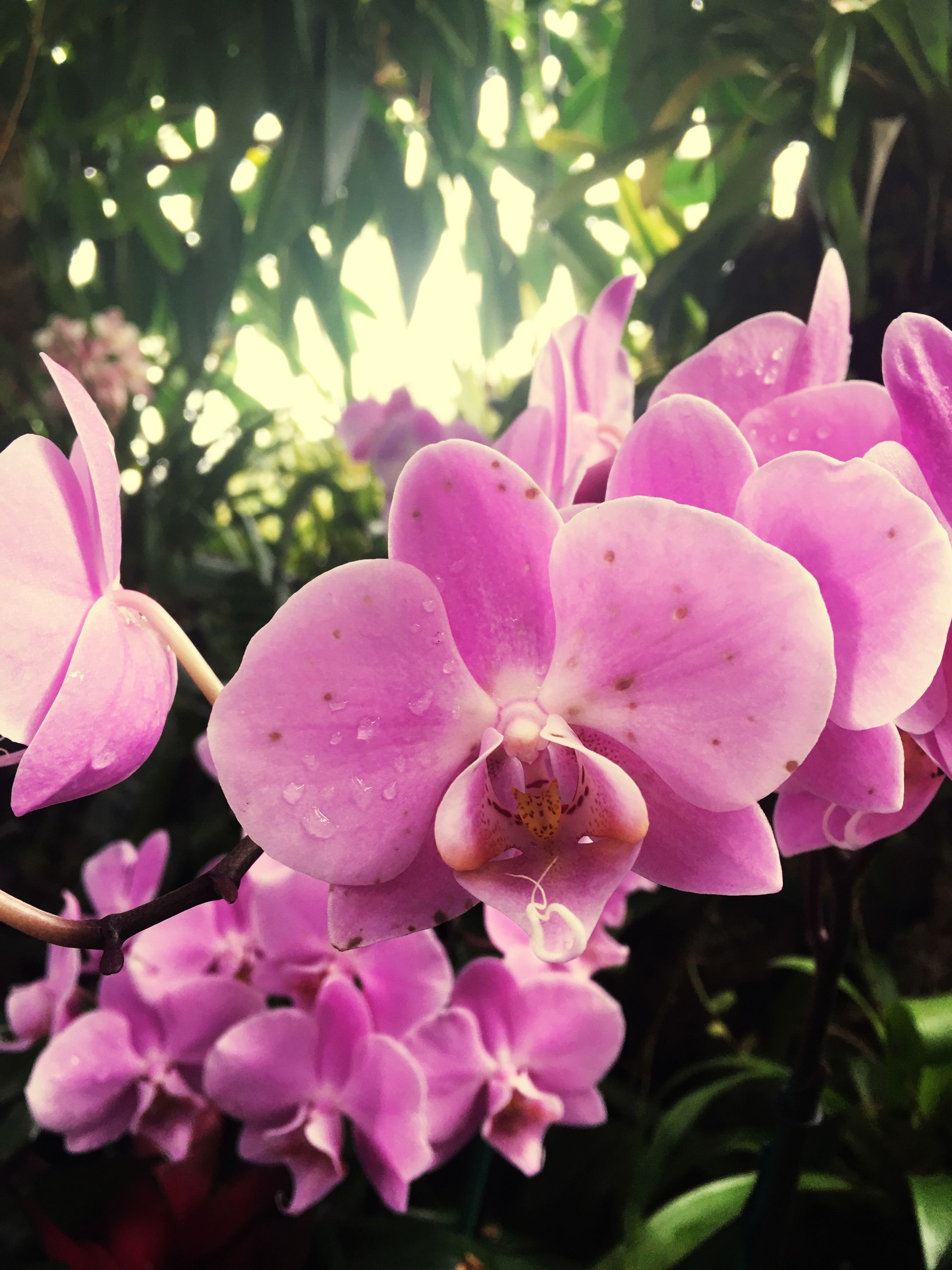 pink color, flower, growth, beauty in nature, fragility, no people, nature, freshness, petal, close-up, plant, outdoors, flower head, orchid, day, rhododendron