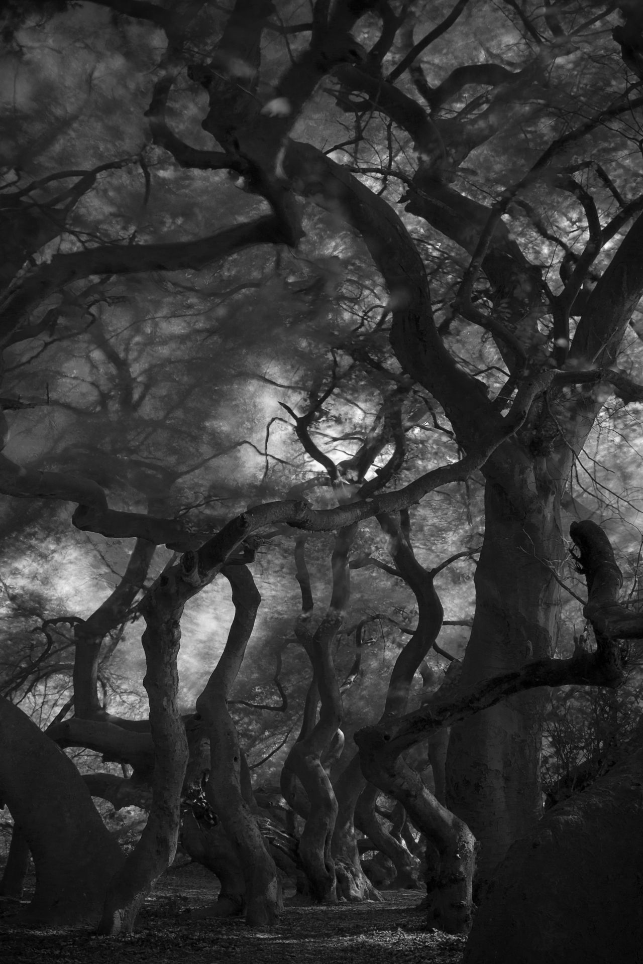 Mysteriousforest Mystic View Mysterious Mystery Forest Mysterious Place Mysterious Tree Black & White Black And White Blackandwhite Photography Black And White Photography Fagus Sylvatica Var. Tortuosa Fagus Sylvatica My Favorite Place Monochrome Photography From My Point Of View Eyeem Market EyeEm Gallery capturing motion Welcome To Black Long Goodbye