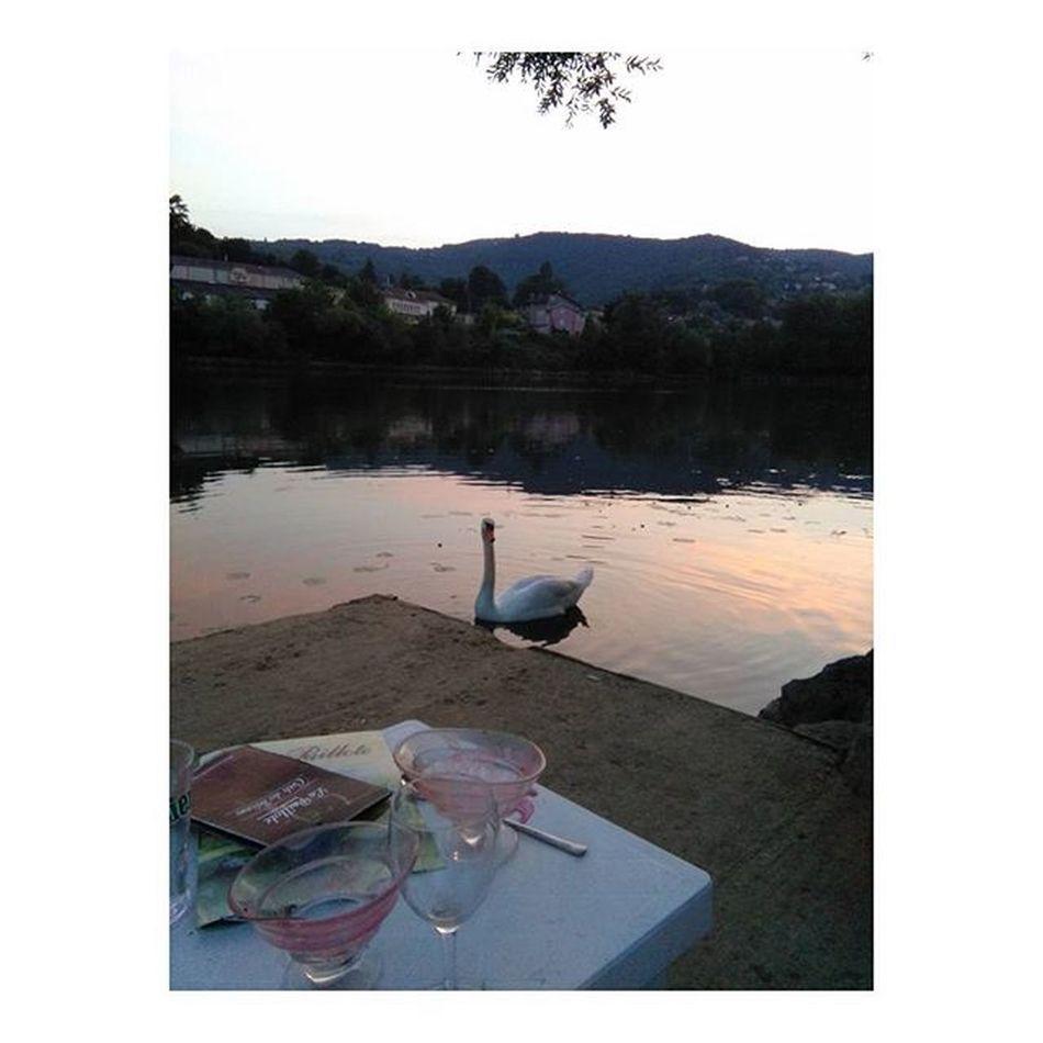 Fontainesursaone Relax Cisne Rhône
