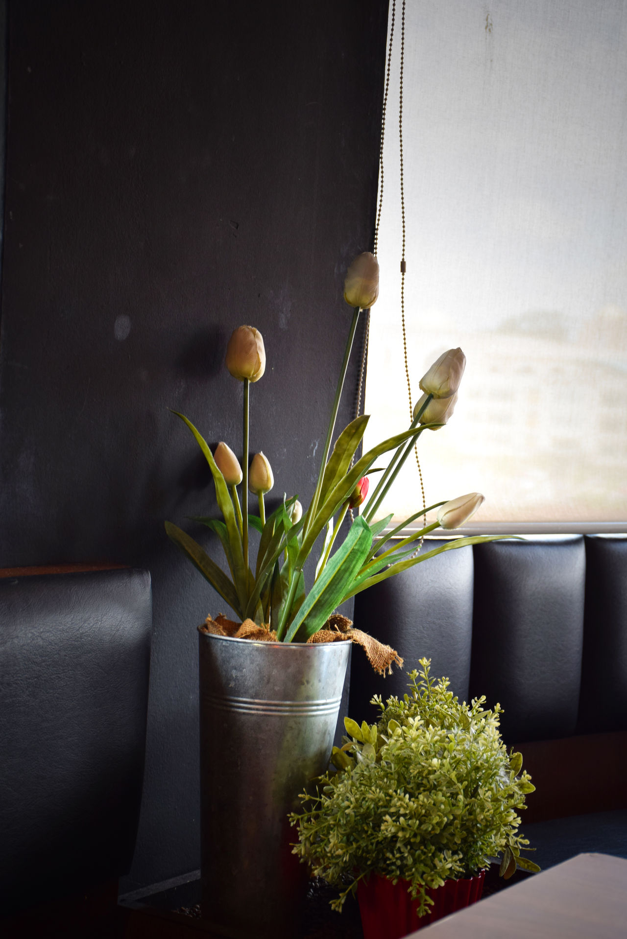 Blossom Botany Cafe Decoration Flower Flower Head Flower Pot Focus On Foreground Freshness In Bloom Leaf Nature Petal Plant Potted Plant Publika The Red Bean Ba Vase Window Sill