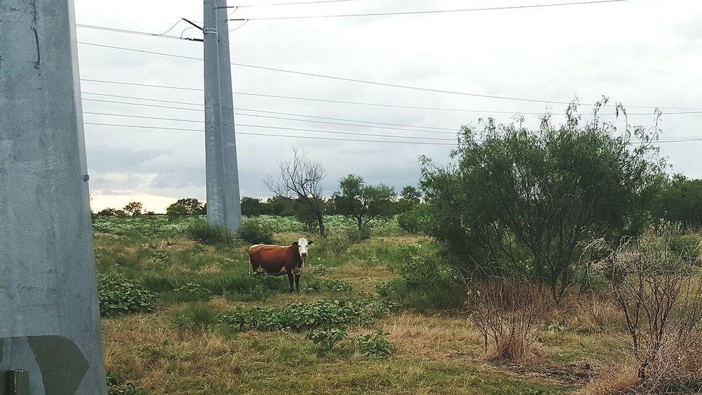 Tecnology Meets Nature Technology Landscape Cattle Plants