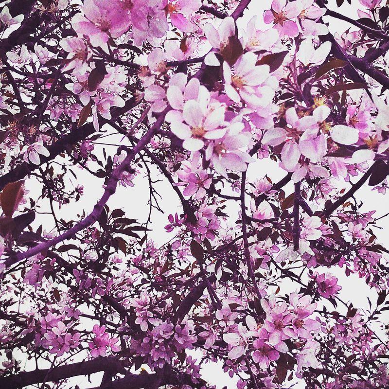 First Eyeem Photo Flowertree Pink Flower Pink