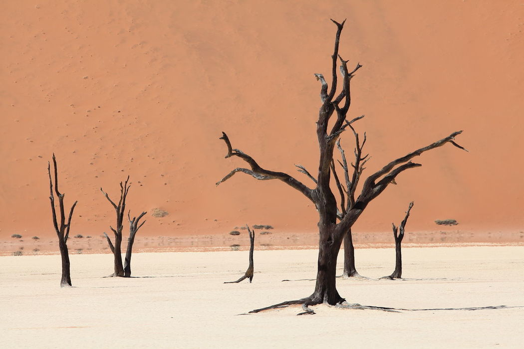 Africa Bare Tree Beauty In Nature Branch Dead Plant Deathvlei Dunes Hanging Out Namib Desert Namib Dunes Namibia Orange Sand Surreal Tranquil Scene Tranquility Tree Tree Trunk
