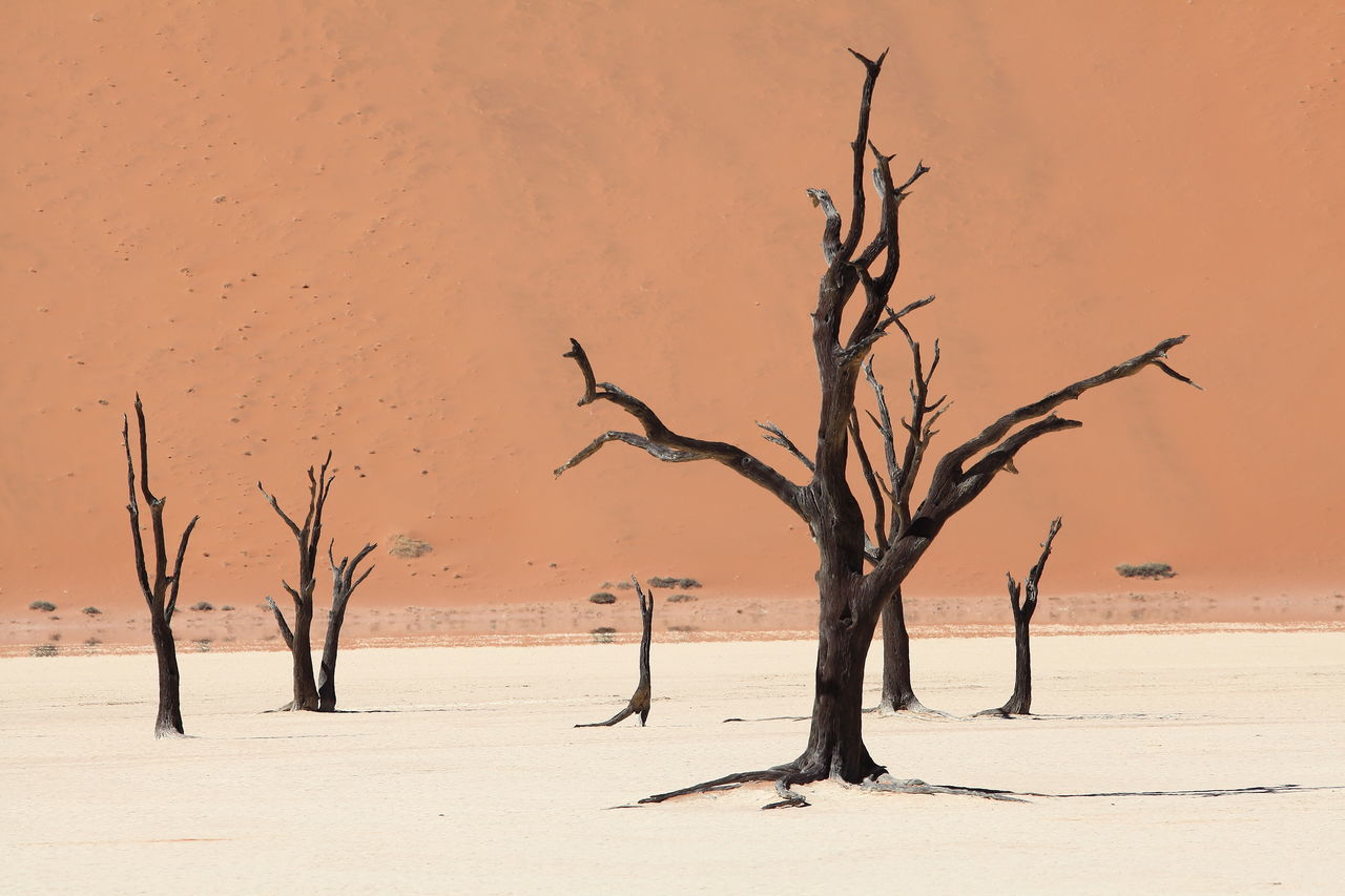 Beautiful stock photos of africa, arid climate, bare tree, beauty in nature, dead plant