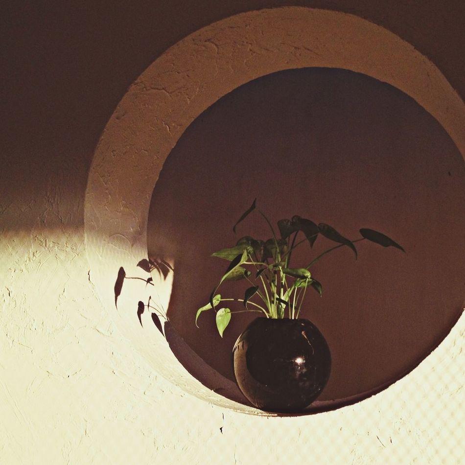 Subject, Light, Shadow... Shadow Sunlight Plant Circle