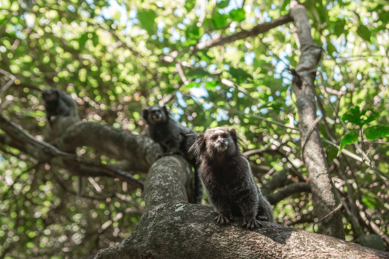 tree, animal themes, animals in the wild, low angle view, mammal, day, nature, sitting, animal wildlife, no people, outdoors, one animal, branch, monkey, growth, perching