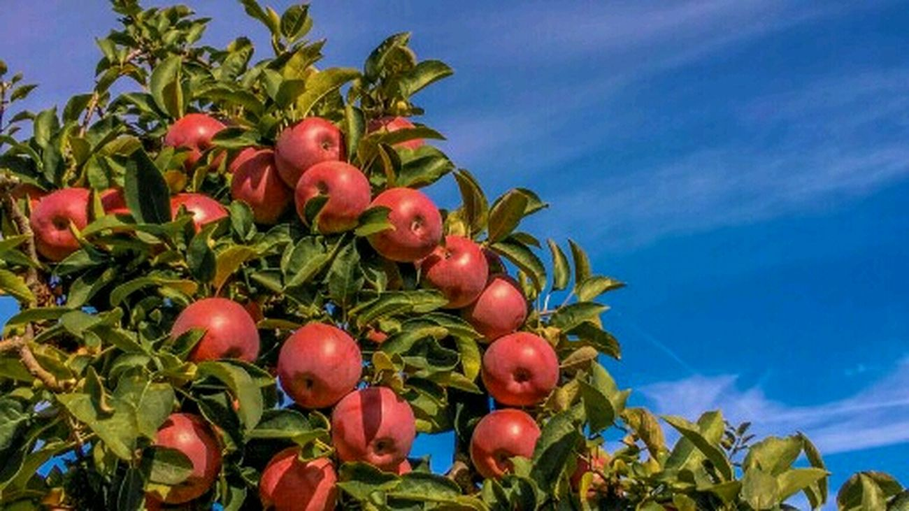 Iran Apple Taking Photos Hello World Eye4photography  First Eyeem Photo 2016 Gooapp