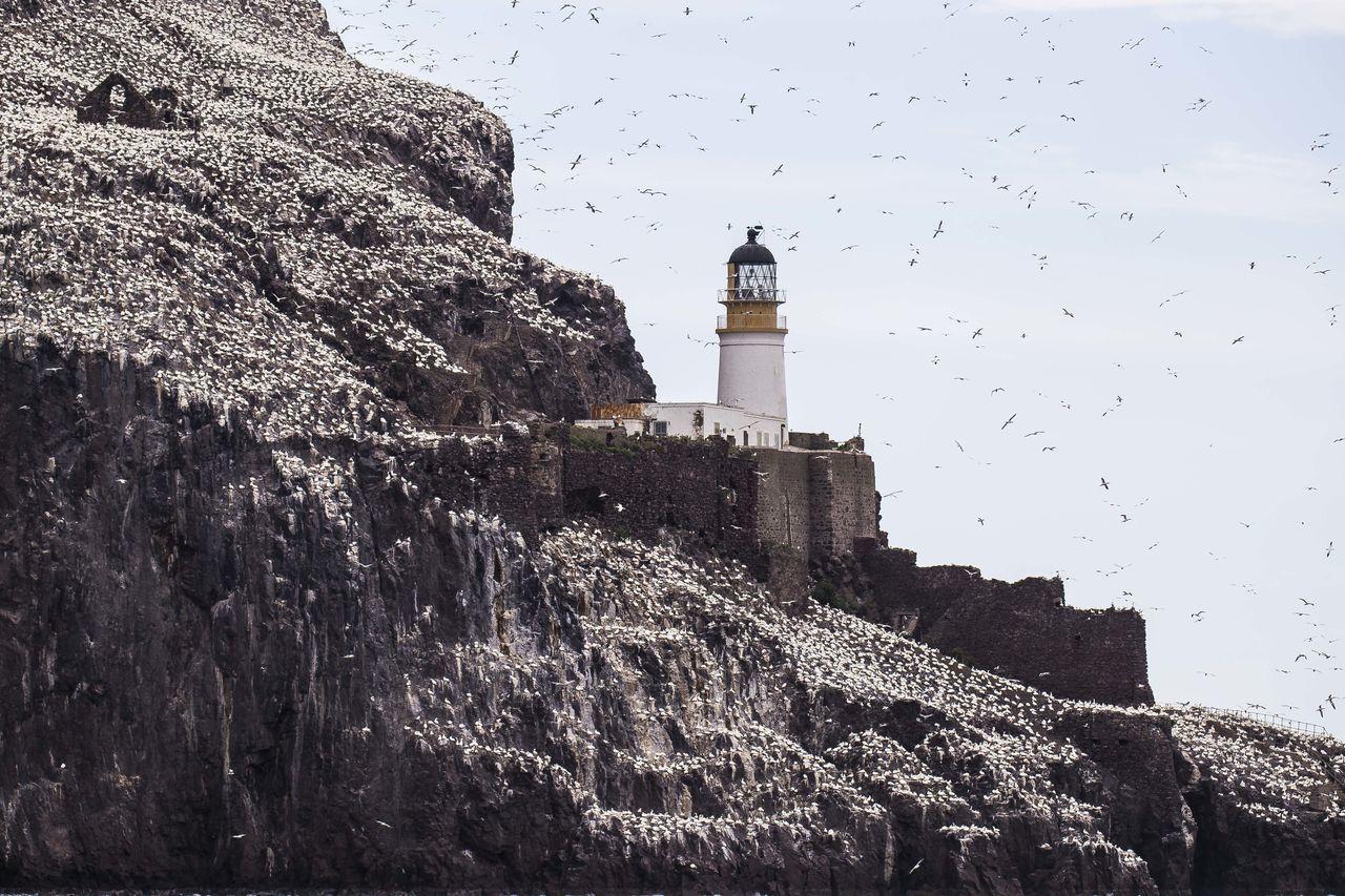 Beautiful stock photos of lighthouse, Architecture, Bird, Building Exterior, Built Structure