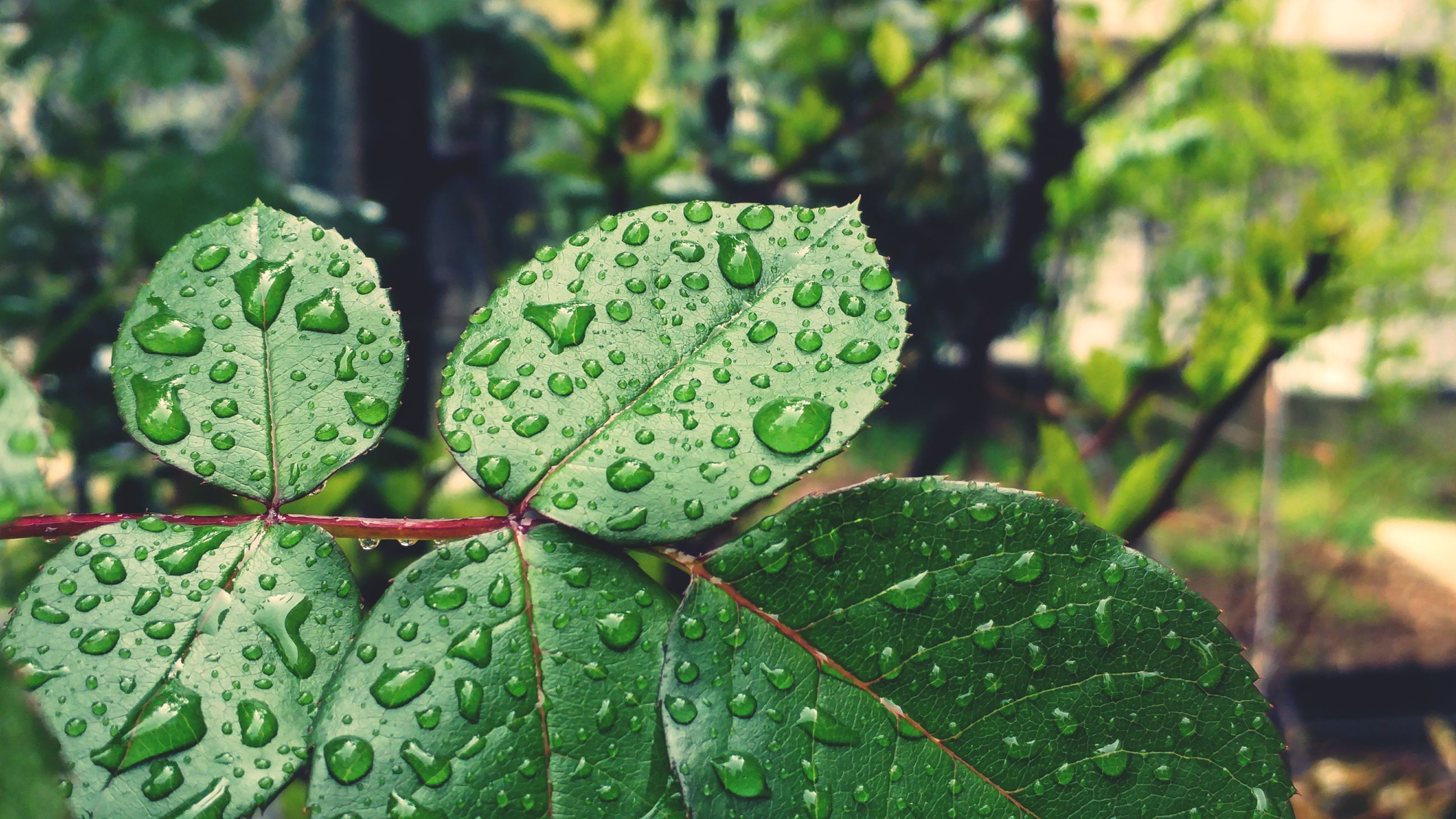 green color, leaf, focus on foreground, close-up, nature, growth, day, drop, no people, freshness, outdoors, wet, water, beauty in nature, plant, raindrop, fragility