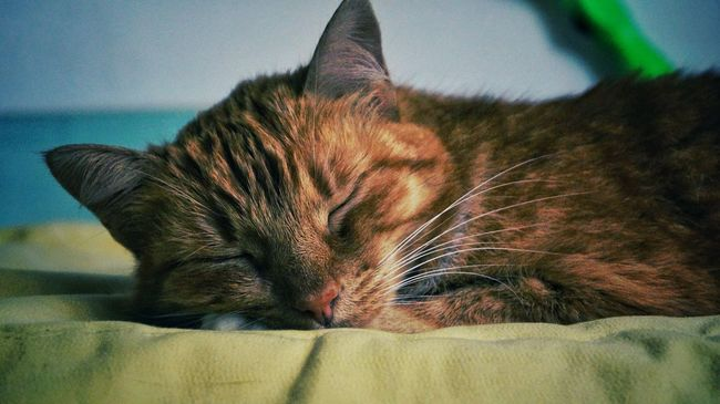 Cat Cat♡ Catsofinstagram Cats 🐱 Catlovers Catportrait Relaxing Hello World Enjoying Life Travel Photography Photoshoot Amazing Photographer Best  Summer Photographic Memory Colorful Love Beautiful Photogrid Taking Photos Worldbestgram Relaxing Like