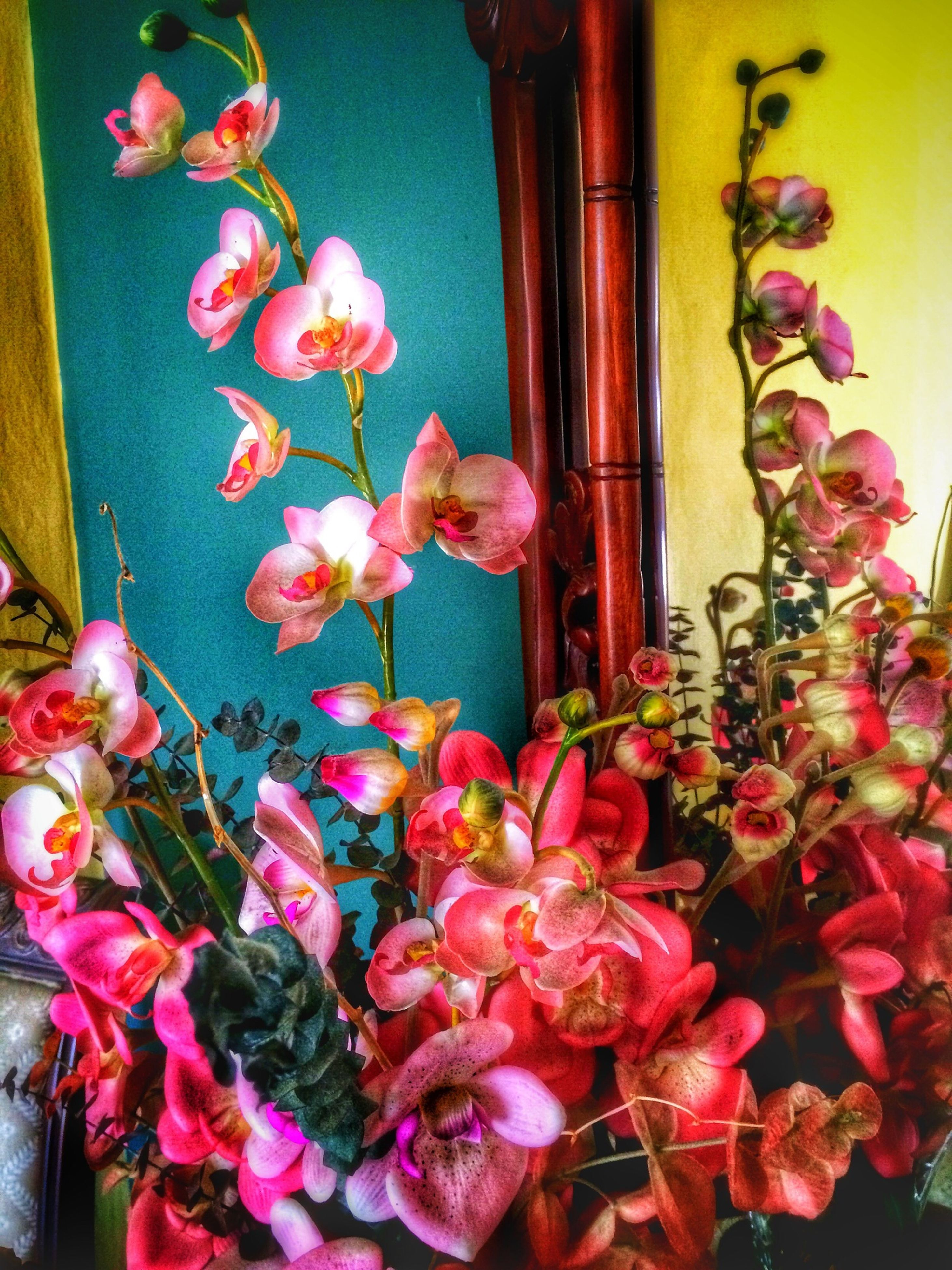 flower, freshness, petal, fragility, indoors, pink color, plant, growth, decoration, red, vase, potted plant, beauty in nature, flower head, nature, close-up, wall - building feature, bunch of flowers, blooming, home interior