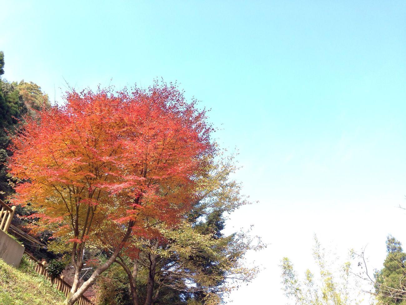 紅葉 Autumn 紅葉狩り Sky_collection アップデートでコメント返信出来るようになった( ´ ▽ ` )ノ