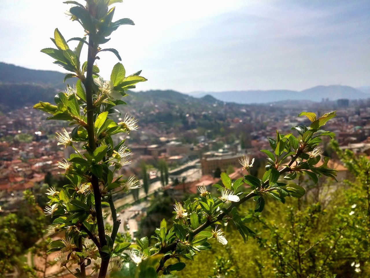 Showcase April City Cityscape Spring Sarajevo Plant Growing Nature OverviewPoint Focus Beautiful Warm Sunny Hot
