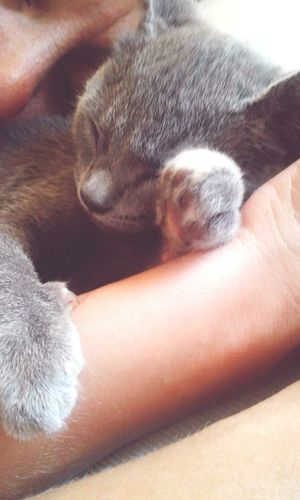 Animal Themes One Animal Pets Mammal Domestic Animals Domestic Cat Real People Paw One Person Human Body Part Feline Close-up Animal Leg Human Leg Indoors  Human Hand Claw Day Gatosfelizes Gatoslindos Gatos😻 GatosFelices Gatos 😍 Multi Colored Cats 🐱