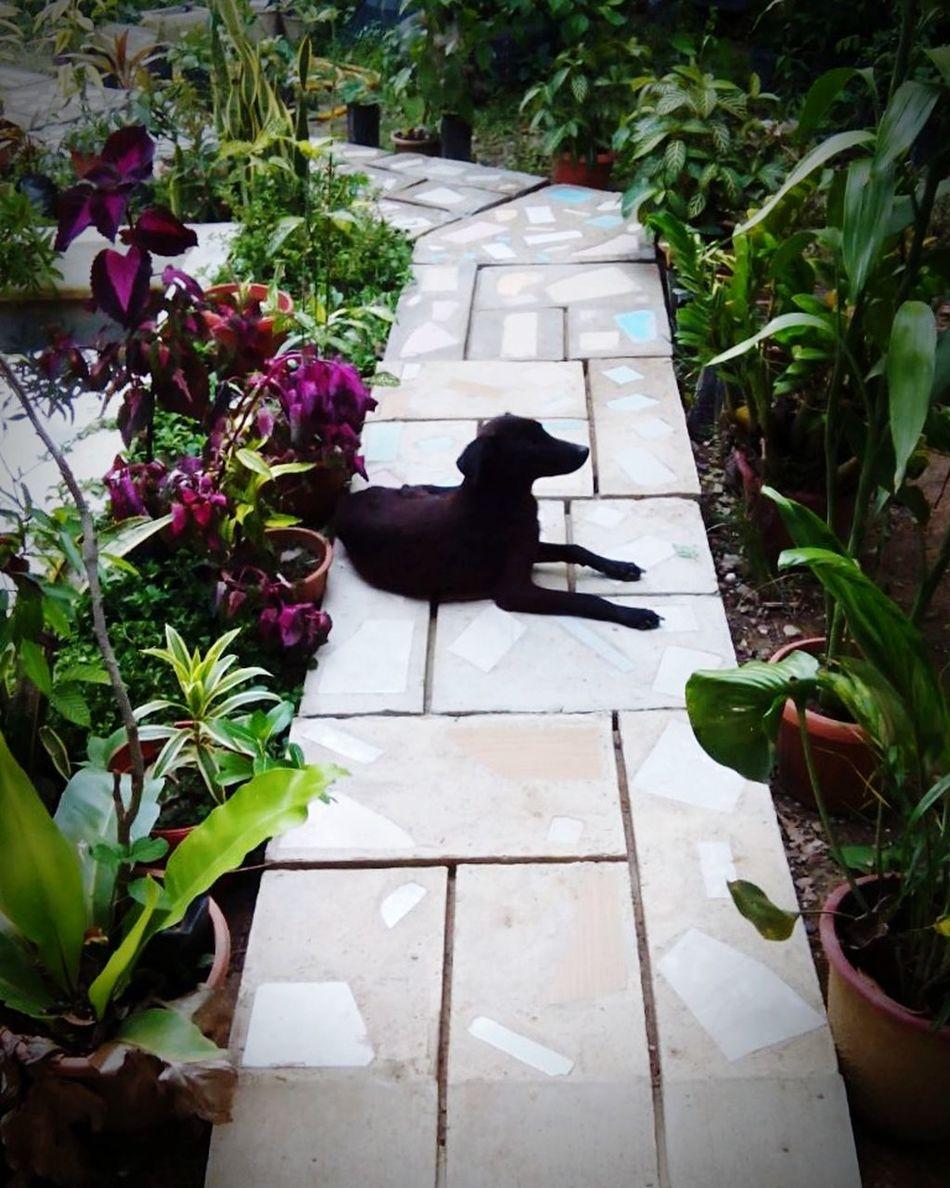 Summer Dogs Wanderingdog Shadow