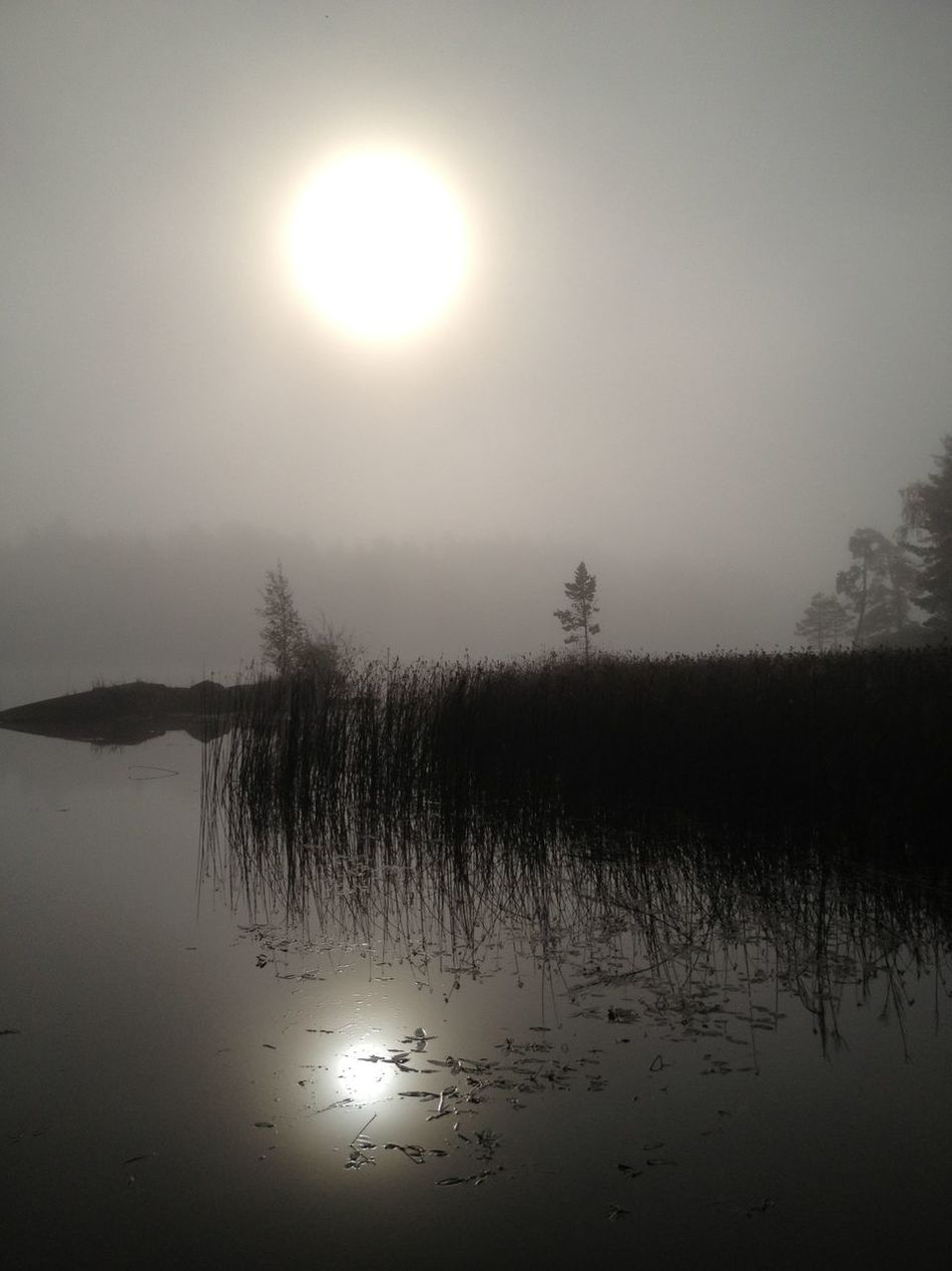 Foggy Morning Melancholic Landscapes The Purist (no Edit, No Filter) Calmwater