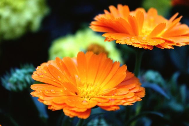 Small flower.....Big world