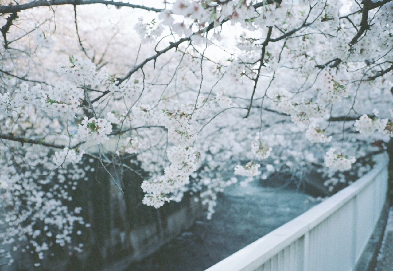 Filmisnotdead 35mm Film Filmcamera Blossom Flower (null)Film Outdoors