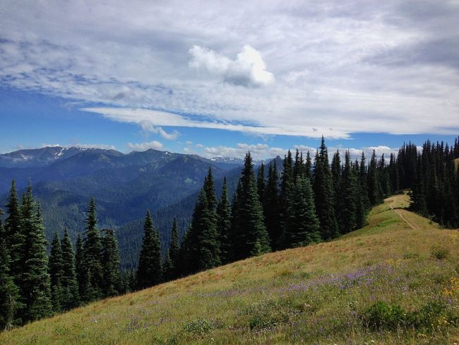 Alpine Hiking Evergreen Trees Hiking Hiking Trail Olympicnationalpark Pacific Northwest  Summer Hiking Summeradventures Wildflowers Mountain snow Mountain Range landscape Scenics tranquil scene Nature snowcapped Season  beauty in nature Tranquility weather Remote majestic