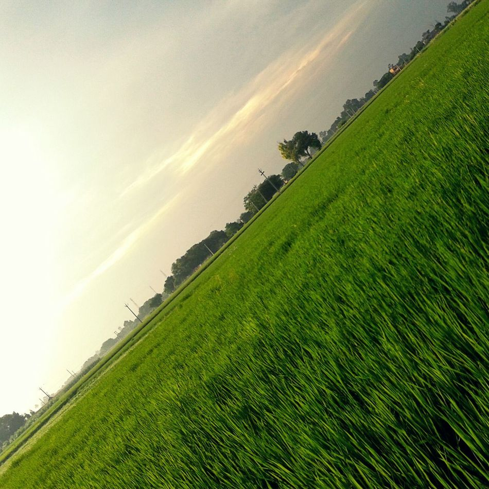 Farms Pind Jattizm First Eyeem Photo