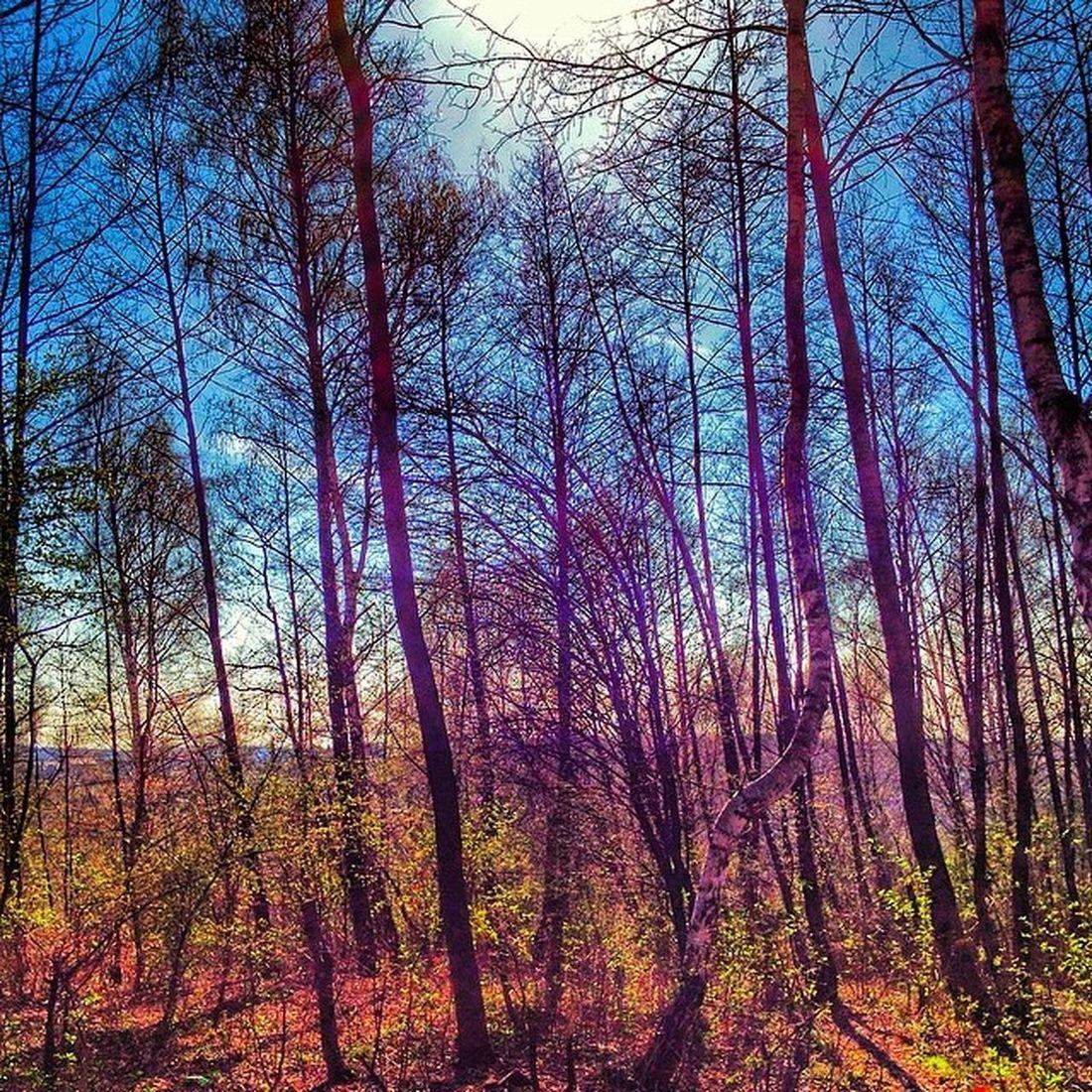 Prawie jak Welesie Trees Instagrampl Likes