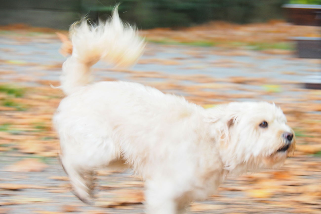 on the run Blur Close-up Day Dog Domestic Animals Fall Free Freedom Hunt Nature No People One Animal Outdoors Pets Running Dog Speed Tail