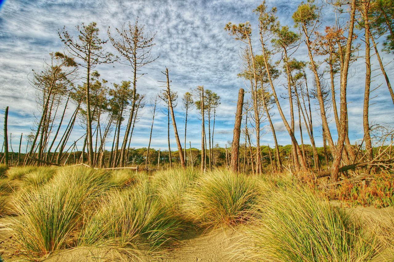 Pastel Power Natural Beauty Alberese Sand Dune Cowntry Nature Photography Treestree Sky And Clouds Sky Sandy Beach Pinetrees Best Plants Plant Outdoors