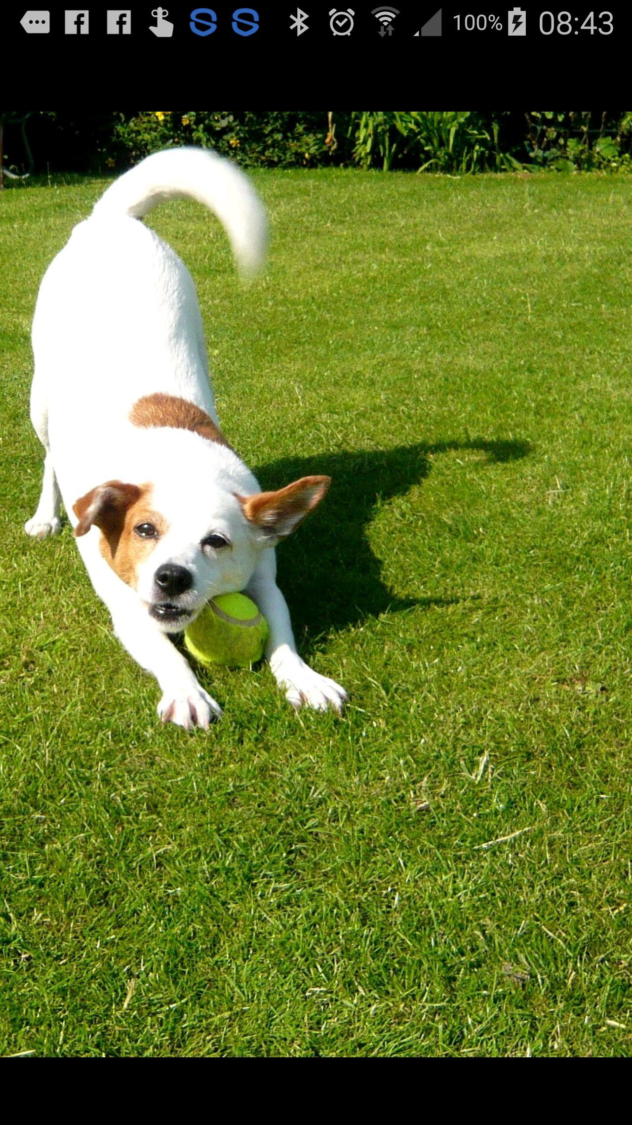 Dog And Ball.