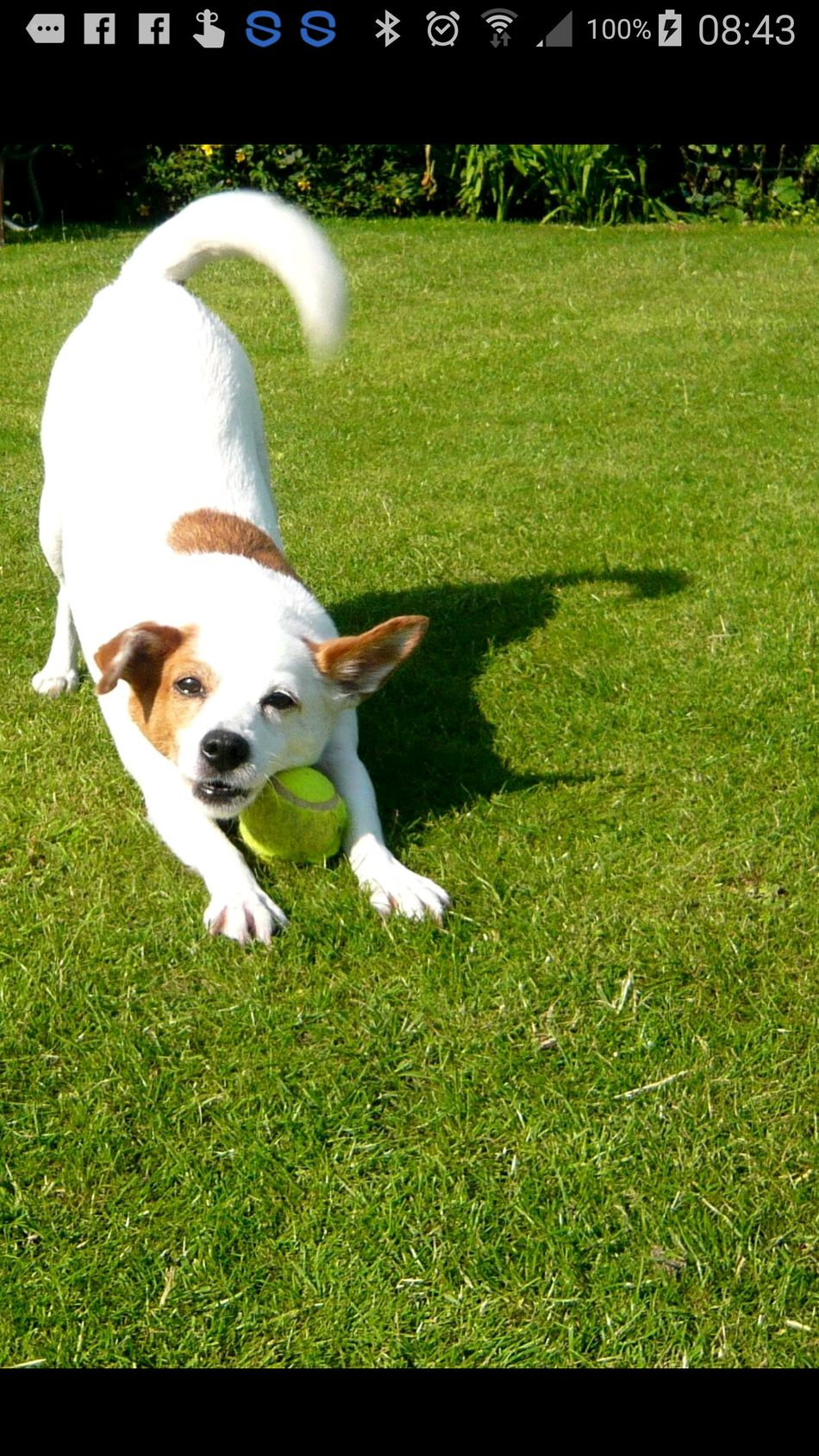 Dog And Ball.