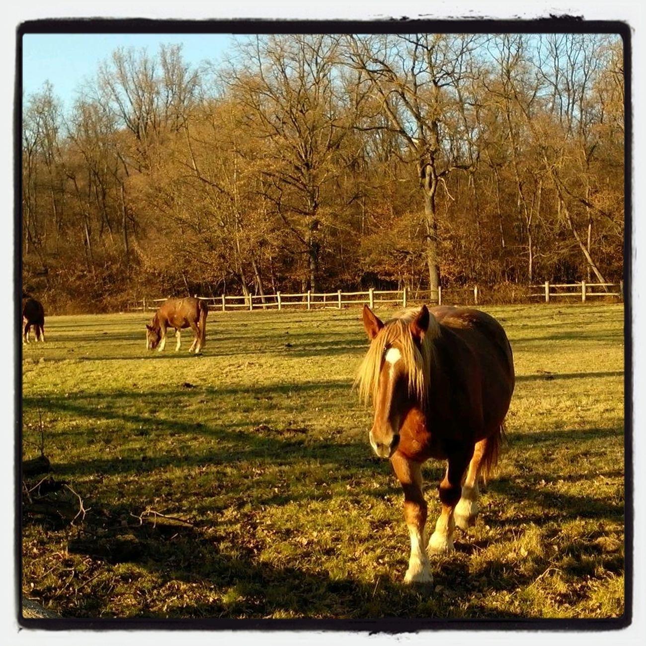 Horses Cavalli