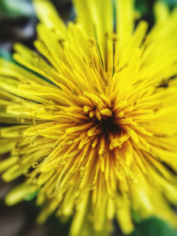 Yellow Flower Yellow Yellow Yellow Flower Collection Check This Out From My Point Of View Check This Out