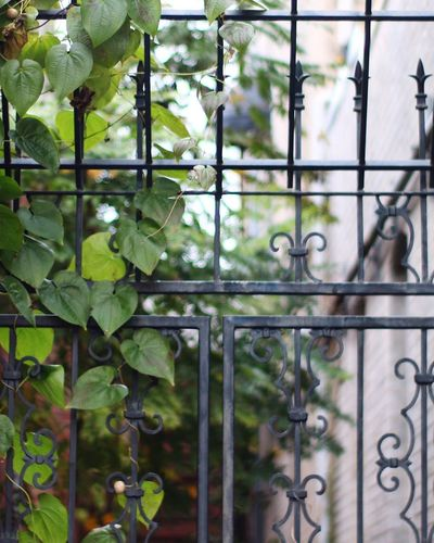 Canon Overgrown Gate Metal Green Color Leaf No People Protection Plant Day Growth Close-up Wrought Iron Outdoors Nature