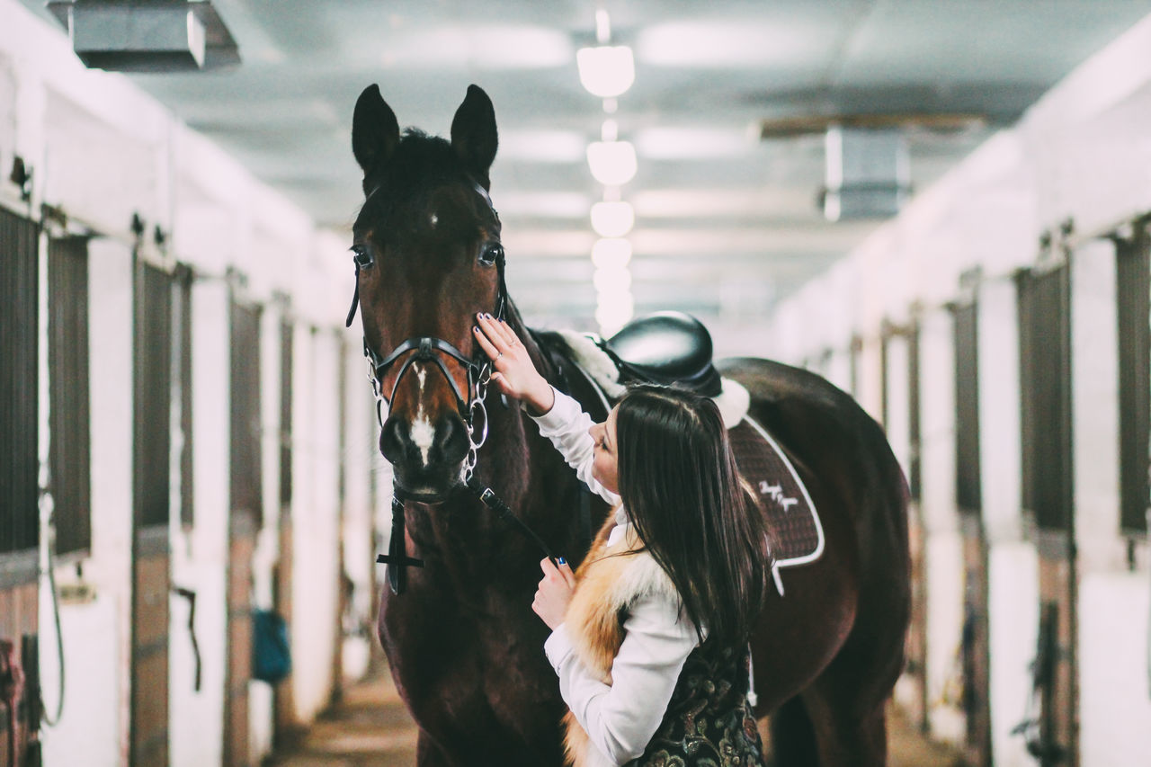 Beautiful stock photos of herz, horse, adults only, one person, women