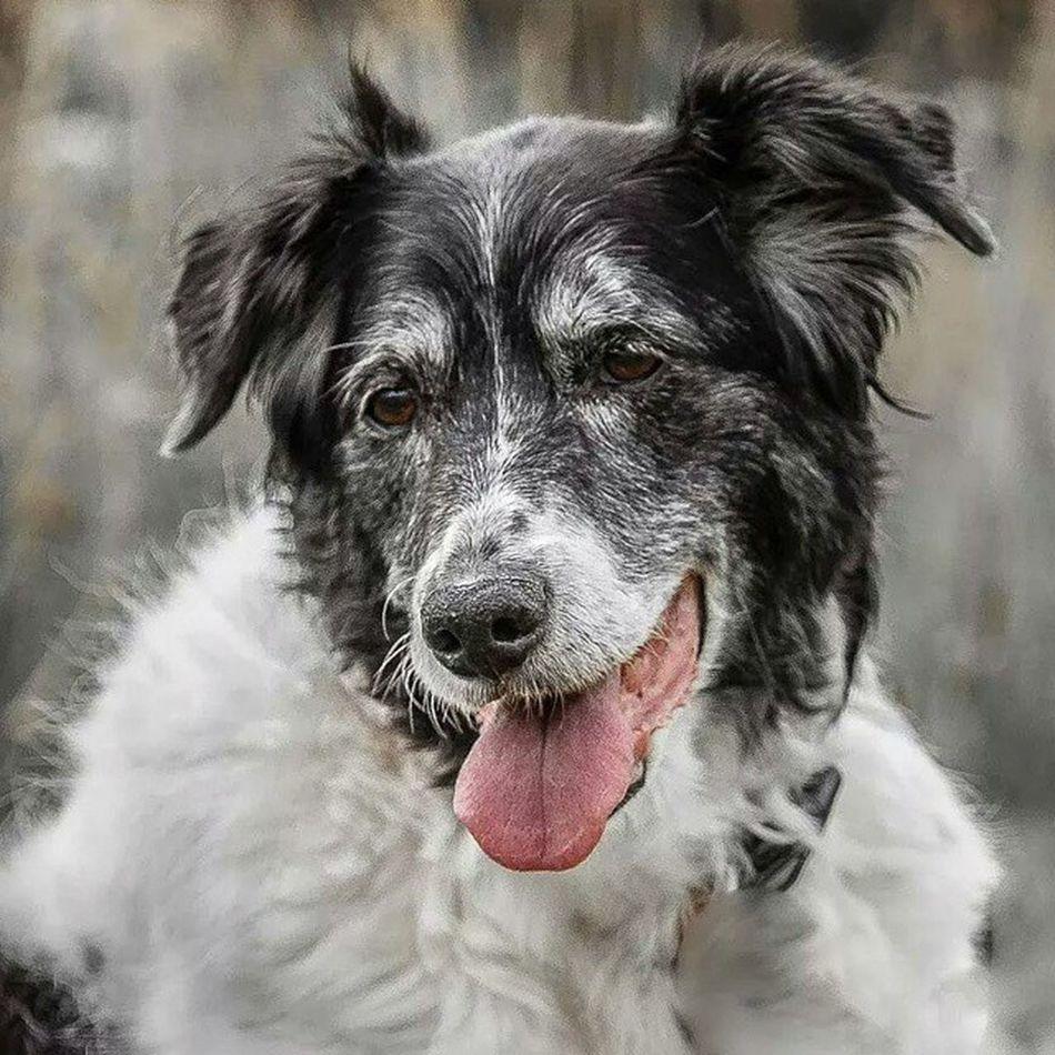Stabyhoun Bordercollie  Friesestabij Dog