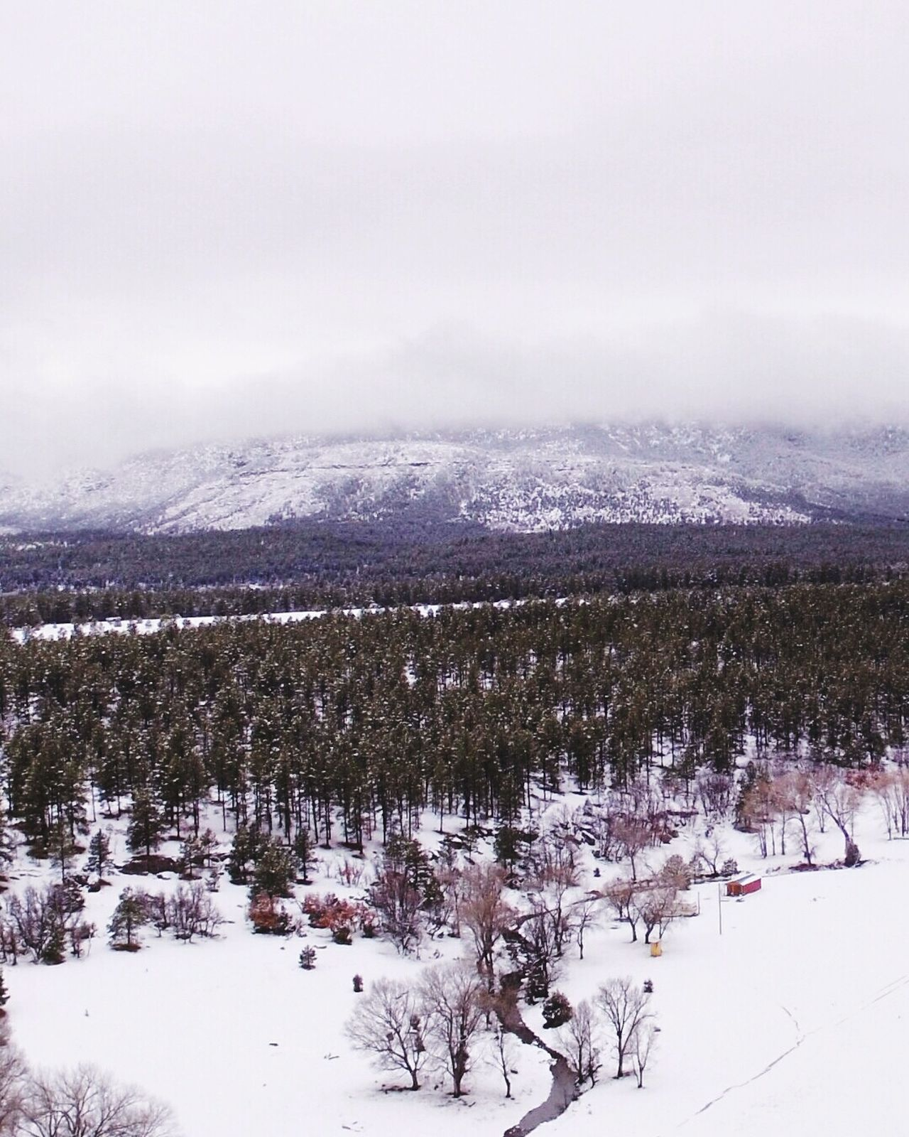 Snow Winter Cold Temperature Dramatic Sky Outdoors Forest Newmexicosunset Newmexicosunsets Newmexicoskys Newmexicophotography Newmexicoskies NewMexicoTRUE DJI Phantom 3 Air Vehicle Dji Global Flying Newmexicomountain Drone  Mountain Peak Mountain Pine Woodland Snowing Sunset Winter Drone