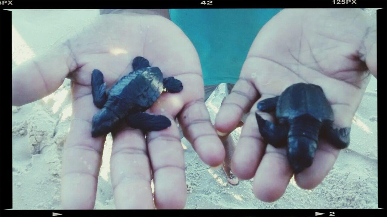 Turtles Aminals Tartaruga Brasil