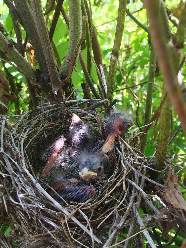 Nestlings Bird's Nest Natural Beauty