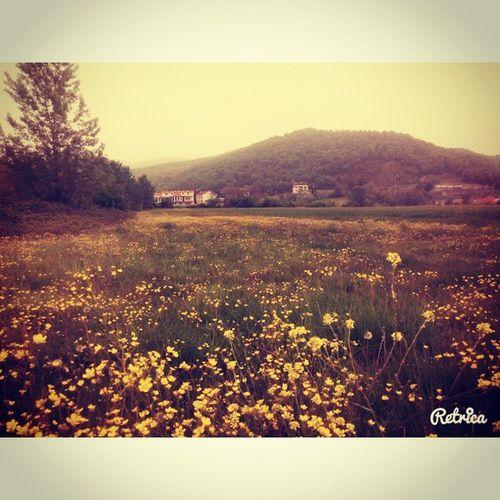 Lost Adasi Diyorum Inanmiyorsunuz gozalabildigine sariyesil spring flowers life cicek bahar ☀🌻🌼