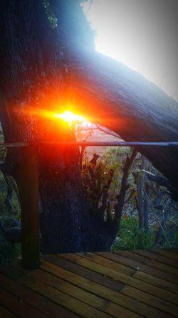 Sunset Outdoors Nature Tree Beauty In Nature BotswanaSundowner EyeEmNewHere