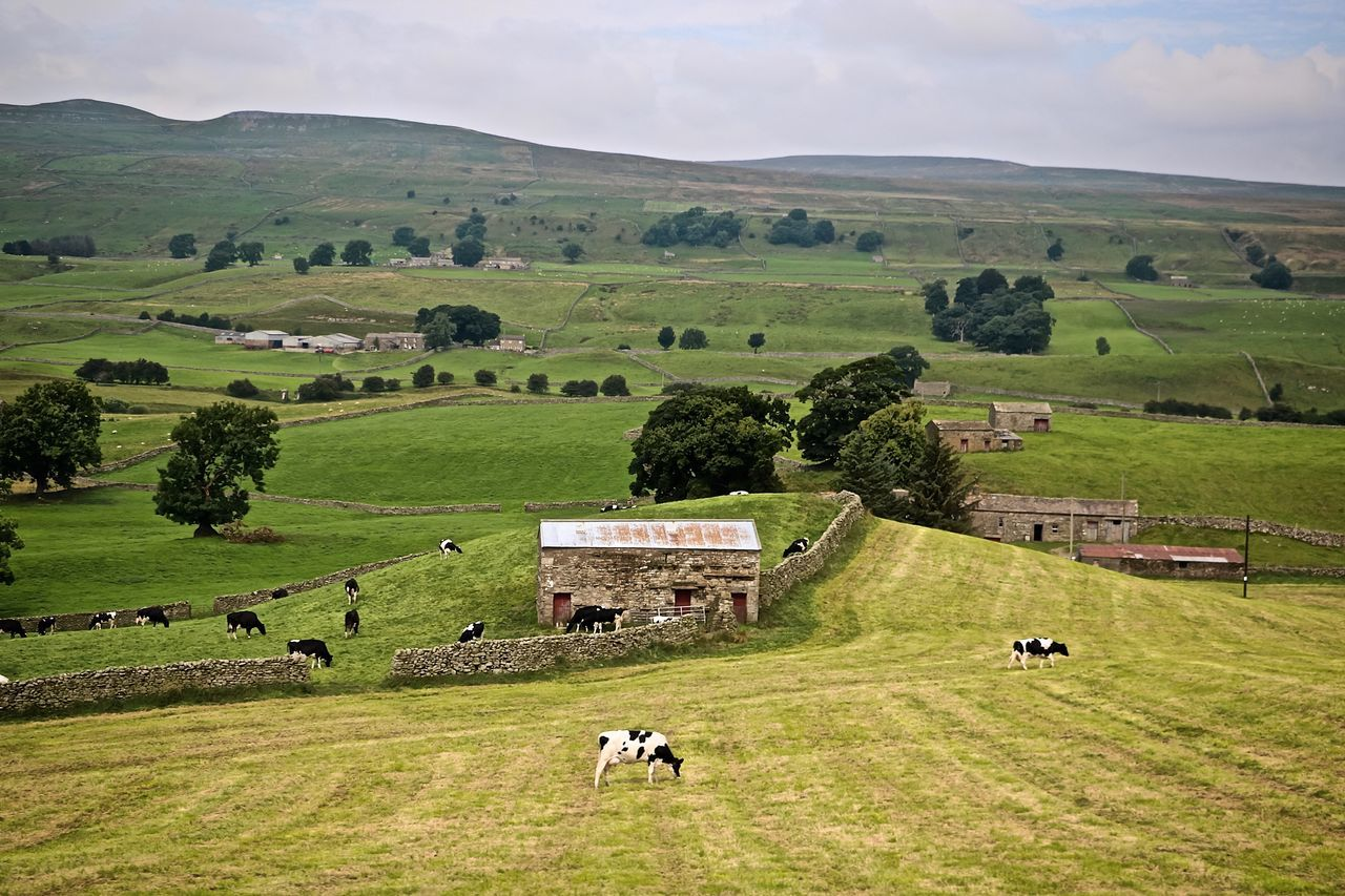 Agriculture England🇬🇧 English Countryside Farm Grazing Grazing Cattle Landscape Landscape_photography Rural Scene
