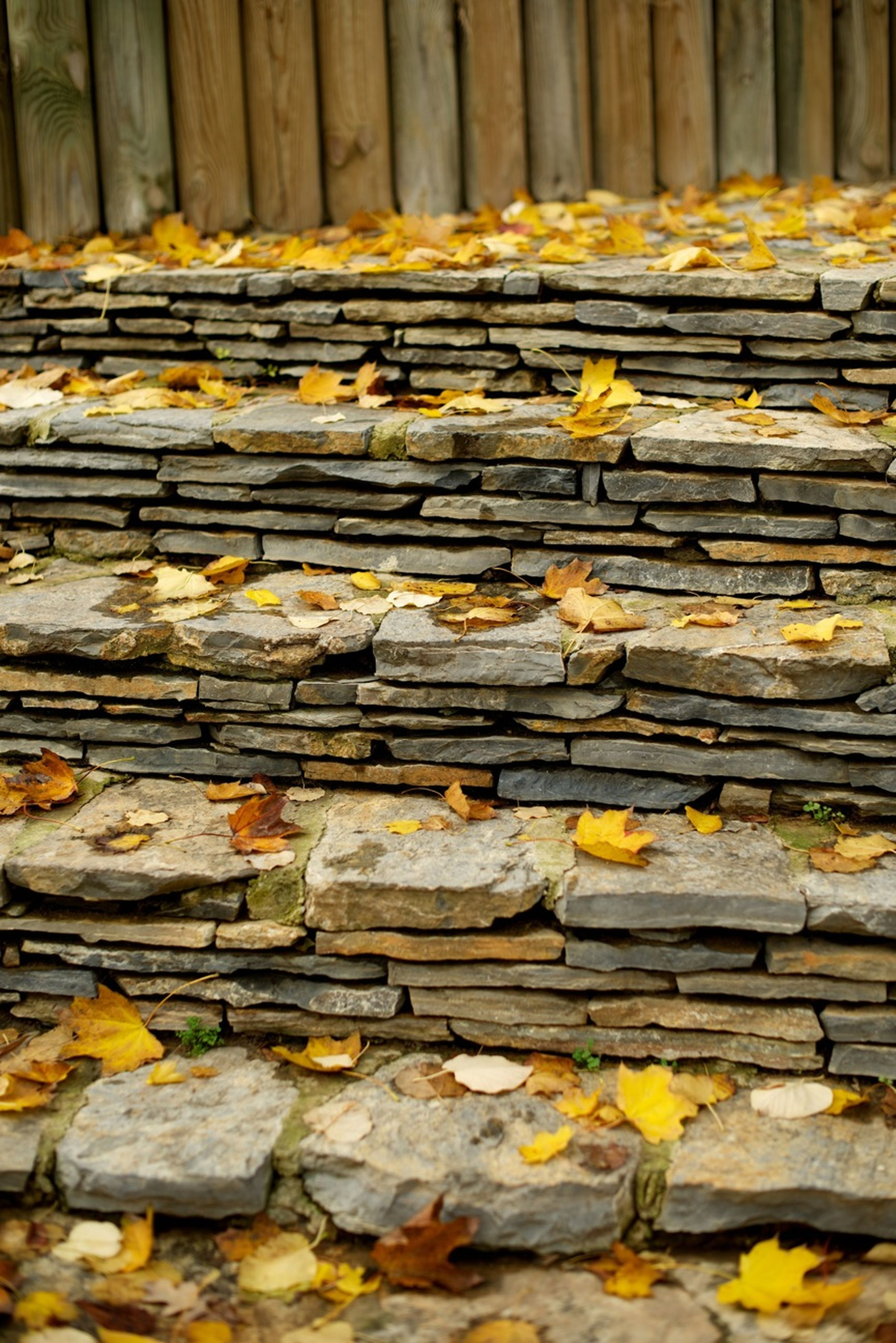 wood - material, full frame, backgrounds, textured, wooden, autumn, yellow, plank, wood, pattern, close-up, leaf, outdoors, surface level, dry, falling, fallen, change, day, steps