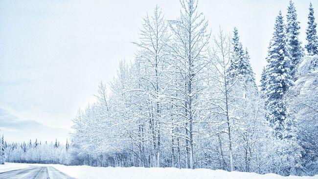 Alaska Trees Snow Trees Cold Winter ❄⛄ Cold Freezing Negative Temperature Nature