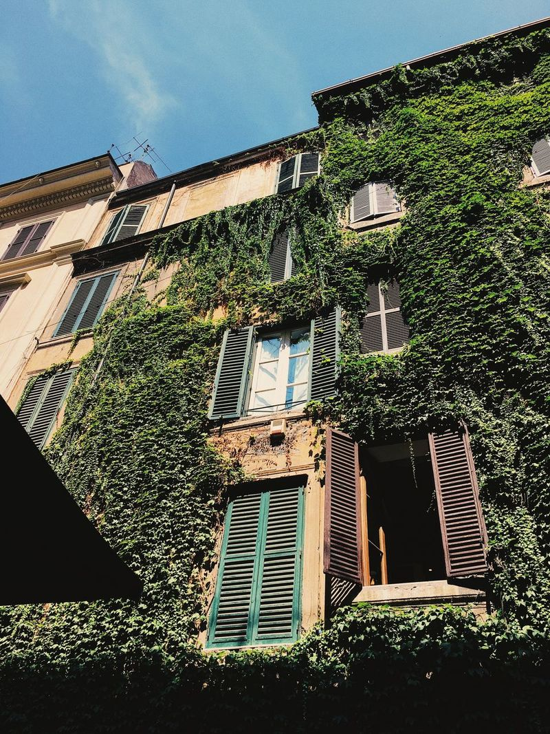 Morning light on windows, Rome. Building Exterior Italy Ivy Low-angle Shot Morning Light Old Buildings Open Windows... Romantic Building Rome Shutters Sky Summer Windows