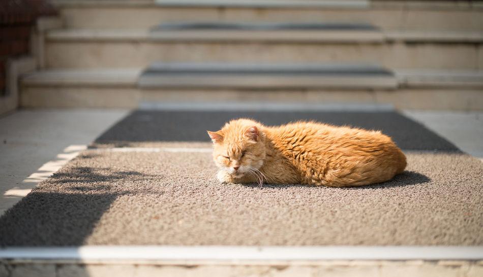 Elder Stray Cat enjoying the Sun Animal Themes Cat Cats Cats Of Istanbul Cat♡ Day Domestic Animals Elder Elderly Eyes Closed  Lying Down Mammal No People One Animal Outdoors Stray Animal Stray Cat Sunlight