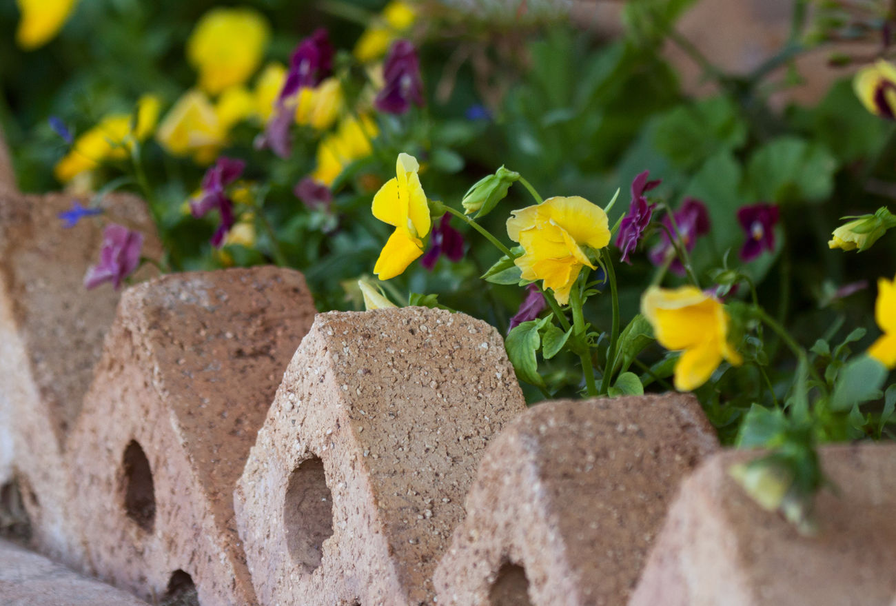 Spring Has Arrived Pansies Yellow Flowers In A Row Organized Chaos Flowers Flowerpower Garden Love Garden Flowers In My Garden Flowers For My Friends I Hope My Pictures Touch Your Hart EyeEm Best Shots Nature Yellow