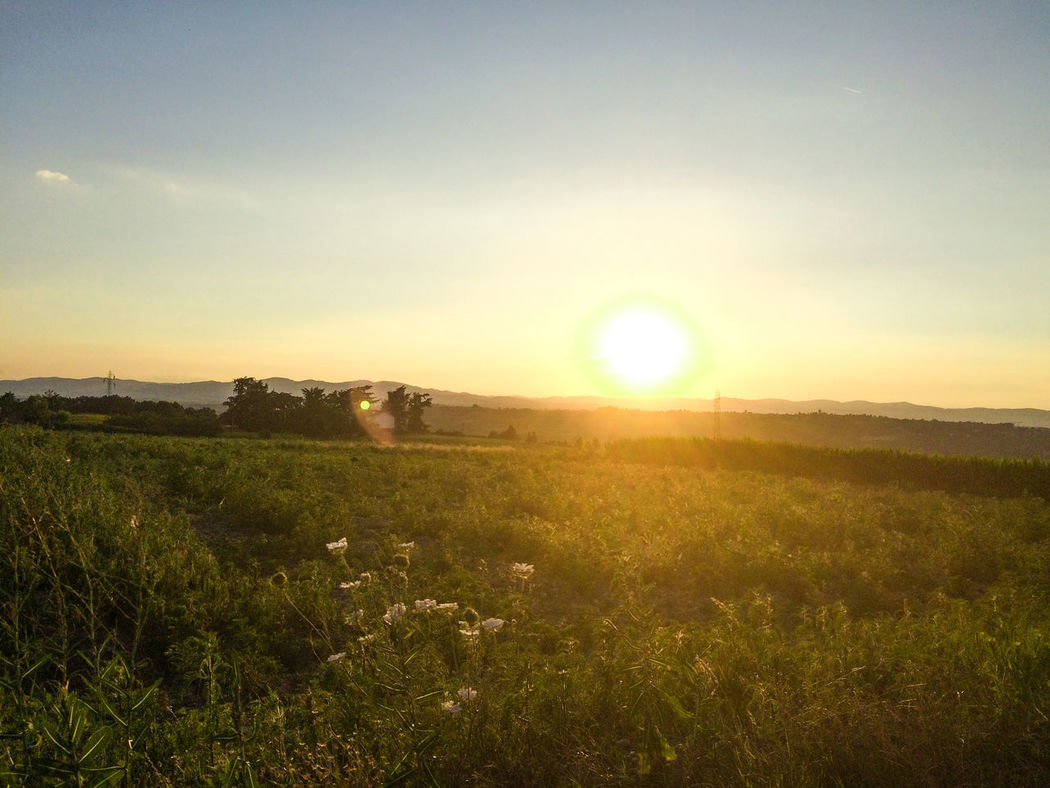 Beauty In Nature Bright Day Field Grass Growth Landscape Lens Flare Nature No People Outdoors Rural Scene Scenics Sky Sun Sunbeam Sunlight Sunset Tranquil Scene Tranquility
