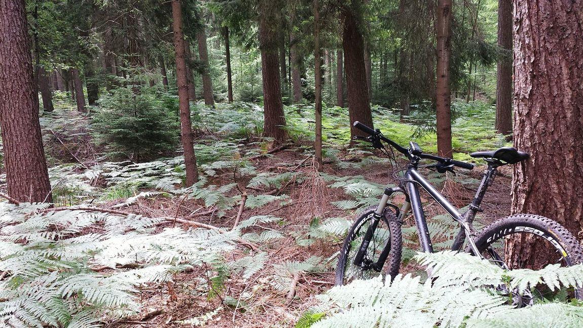 MTB Mtb Love MTB Biking MTB ADVENTURE Hardtail Freeride